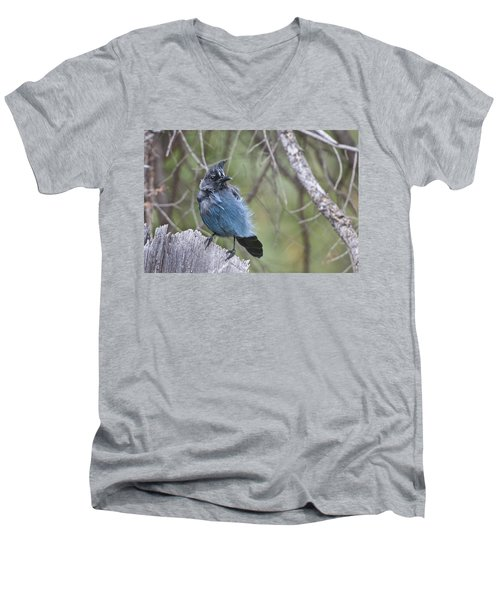 Stellar's Jay Men's V-Neck T-Shirt