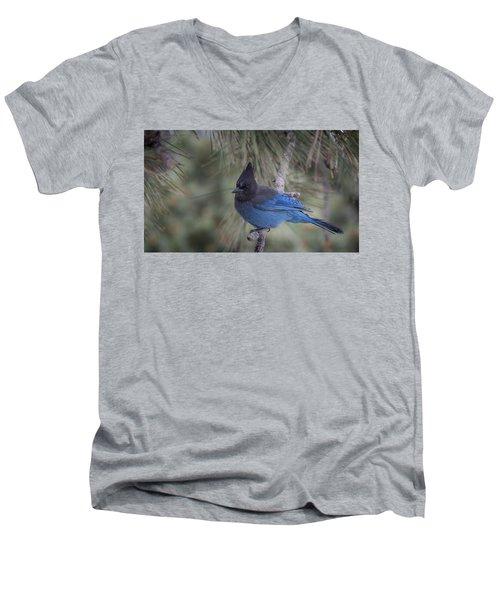 Steller's Jay Men's V-Neck T-Shirt by Tyson Smith