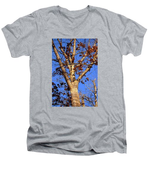 Stunning Tree Men's V-Neck T-Shirt