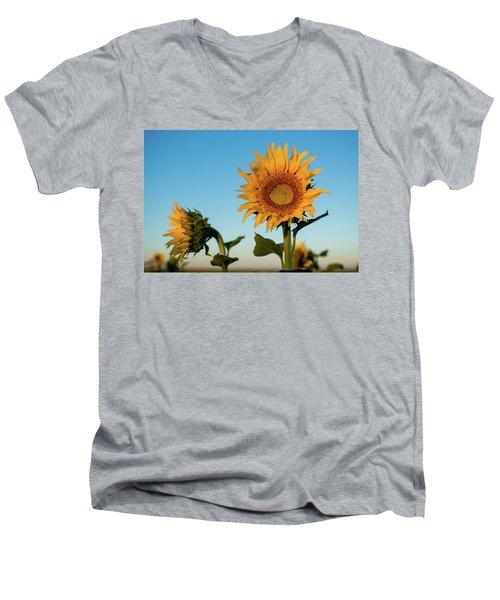 Sunflowers At Sunrise 1 Men's V-Neck T-Shirt