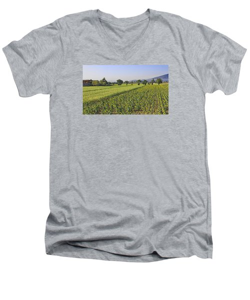 Sunflowers Of Tuscany Men's V-Neck T-Shirt by Allan Levin