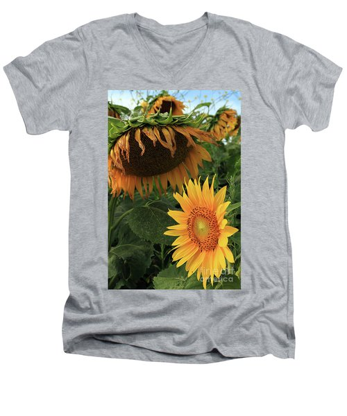 Sunflowers Past And Present Men's V-Neck T-Shirt