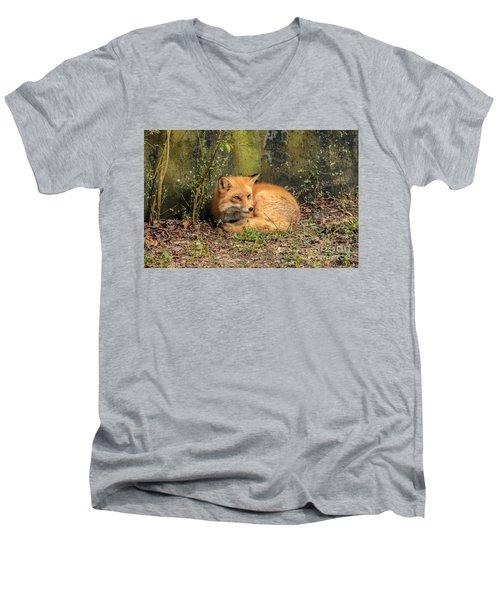 Sunning Fox Men's V-Neck T-Shirt by Debbie Green
