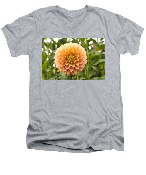 Sunny Dahlia Men's V-Neck T-Shirt