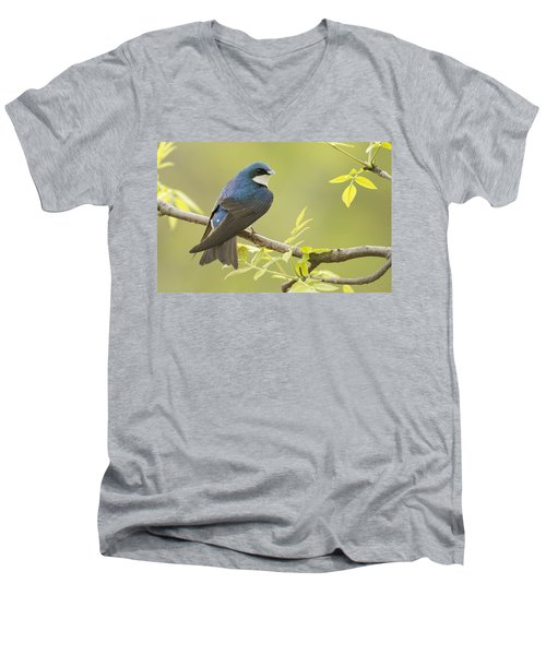 Swallow Men's V-Neck T-Shirt by Mircea Costina Photography