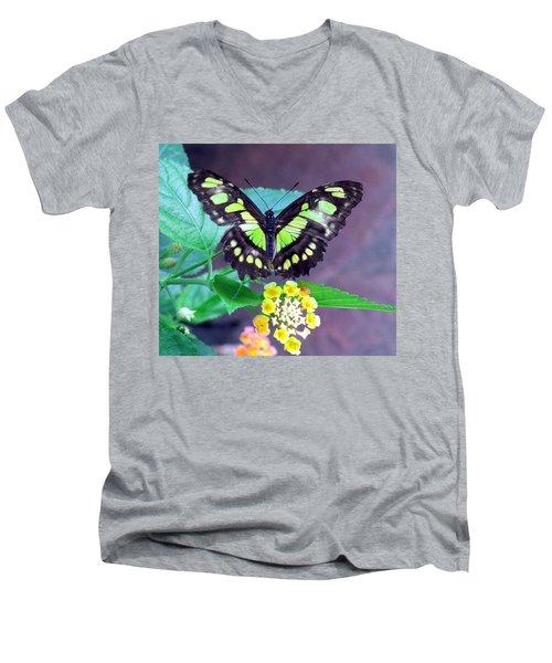 Tailed Jay Visits Lantana Men's V-Neck T-Shirt by Betty Buller Whitehead