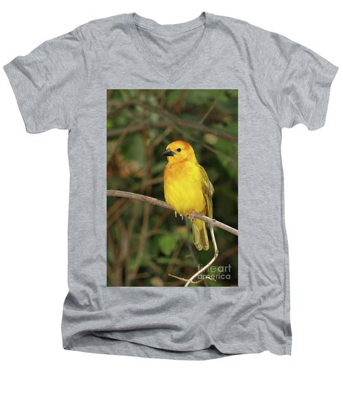 Taveta Golden Weaver #2 Men's V-Neck T-Shirt