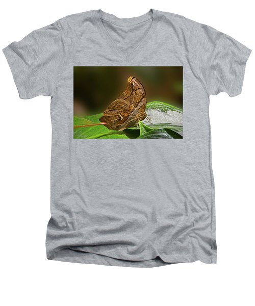 Tawny Owl Men's V-Neck T-Shirt by Ronda Ryan