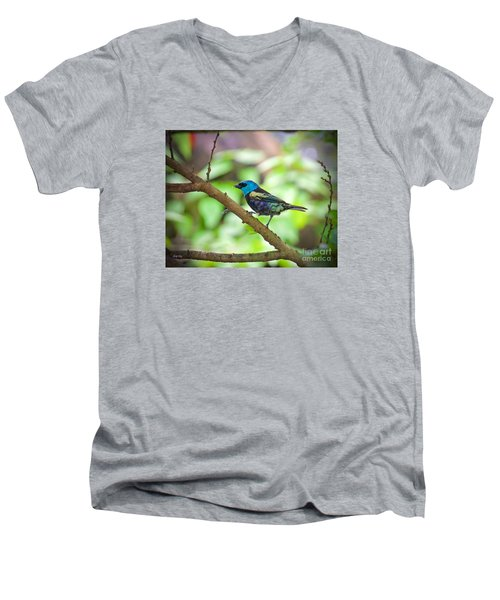 Men's V-Neck T-Shirt featuring the painting The Blue Necked Tanager by Judy Kay