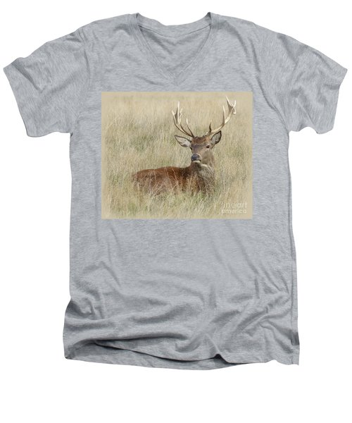 The Gentle Stag Men's V-Neck T-Shirt