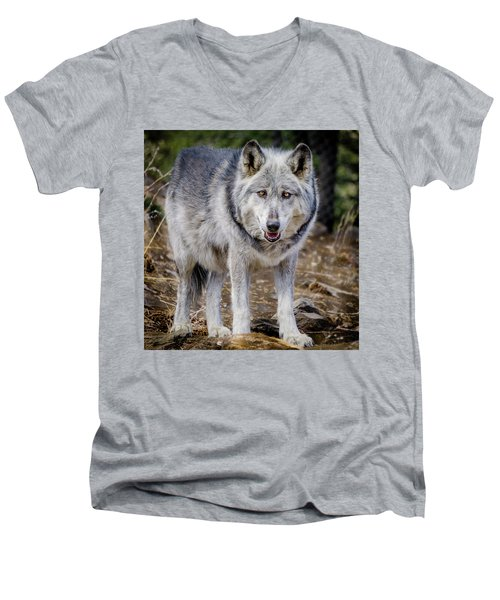 Men's V-Neck T-Shirt featuring the photograph The Great Gray Wolf by Teri Virbickis