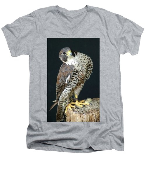The Proud Falcon Men's V-Neck T-Shirt