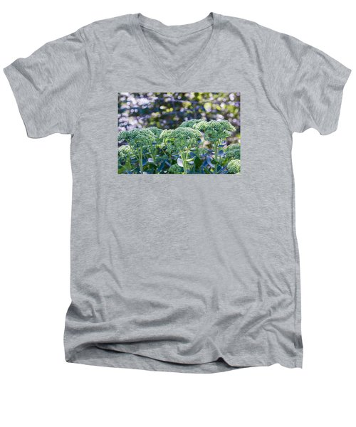 The Sedum Forest Men's V-Neck T-Shirt