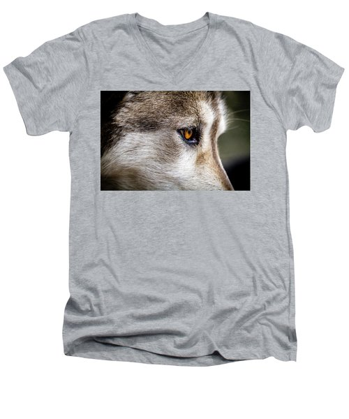 Men's V-Neck T-Shirt featuring the photograph Timber Wolf Stare by Teri Virbickis