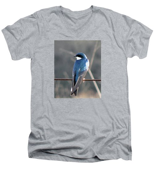 Tree Swallow Men's V-Neck T-Shirt