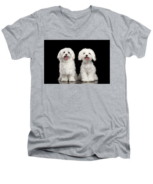 Men's V-Neck T-Shirt featuring the photograph Two Happy White Maltese Dogs Sitting, Looking In Camera Isolated by Sergey Taran