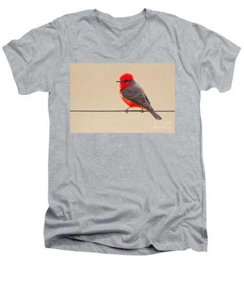 Vermilion Flycatcher Men's V-Neck T-Shirt