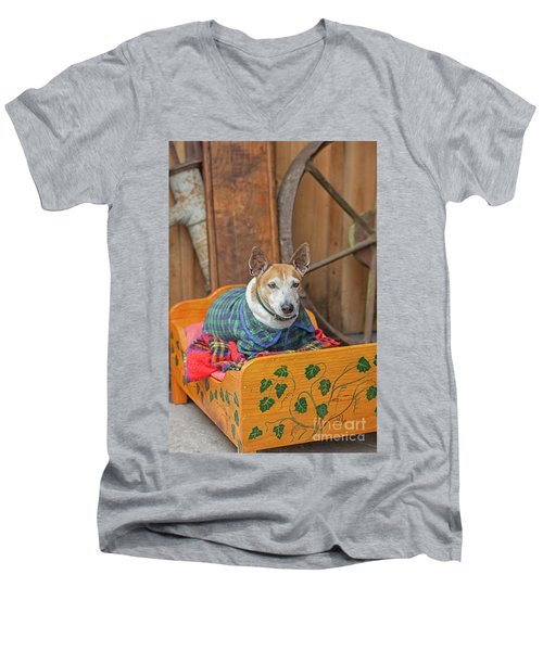 Men's V-Neck T-Shirt featuring the photograph Very Old Pet Dog In Clothes On Own Bed by Patricia Hofmeester