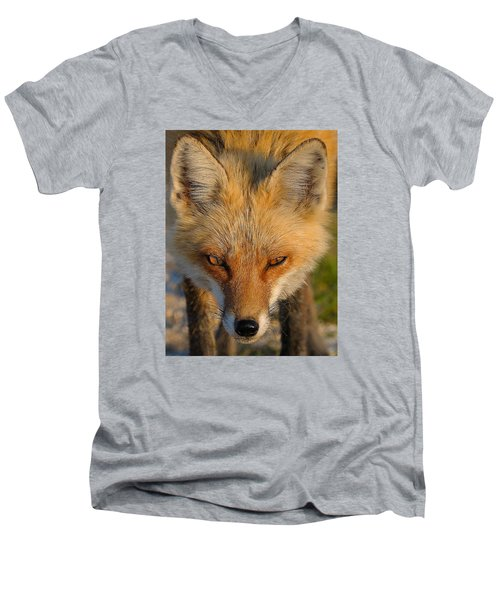 Vixen Men's V-Neck T-Shirt