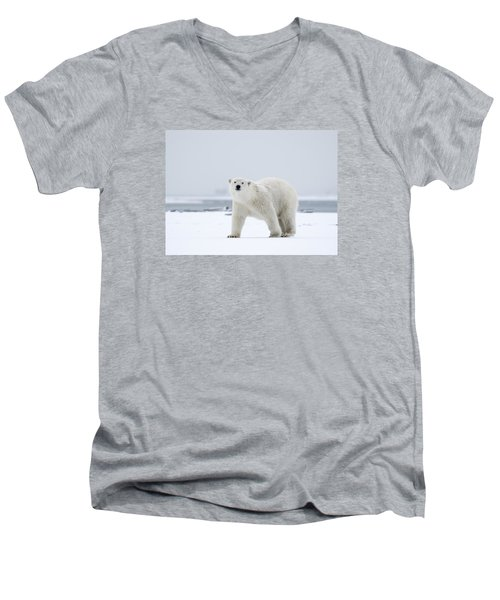 Watchful In The Arctic Men's V-Neck T-Shirt