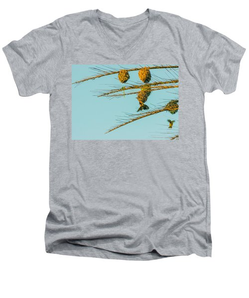 Weaver Birds Men's V-Neck T-Shirt by Patrick Kain