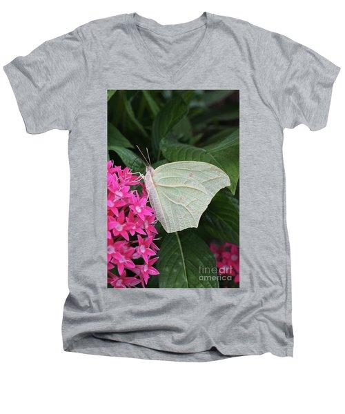 White Angled Sulphur #3 Men's V-Neck T-Shirt