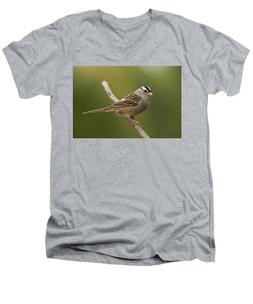 Men's V-Neck T-Shirt featuring the photograph White-crowned Sparrow by Doug Herr