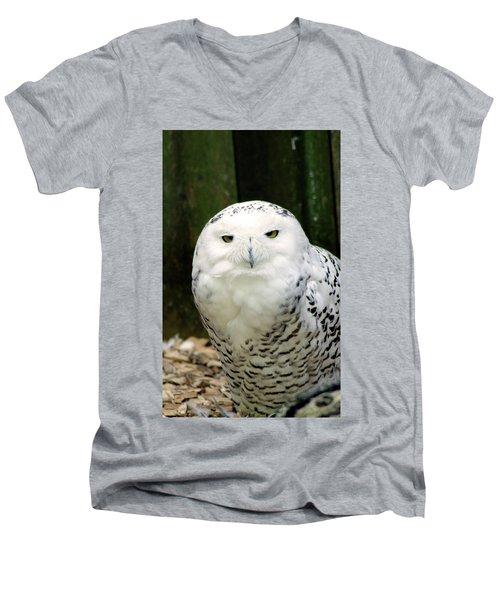 White Owl Men's V-Neck T-Shirt by Rainer Kersten