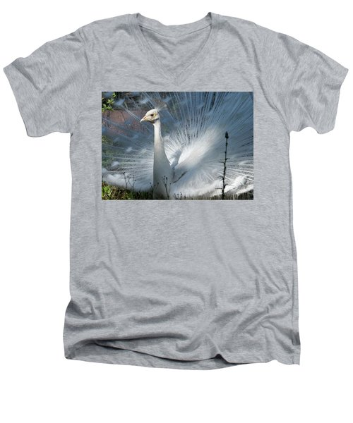White Peacock Men's V-Neck T-Shirt