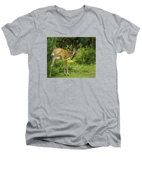 White Tailed Deer Scratching It's Nose Men's V-Neck T-Shirt by Ken Morris