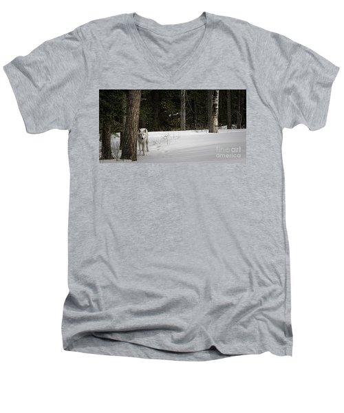White Wolf Men's V-Neck T-Shirt by Brad Allen Fine Art