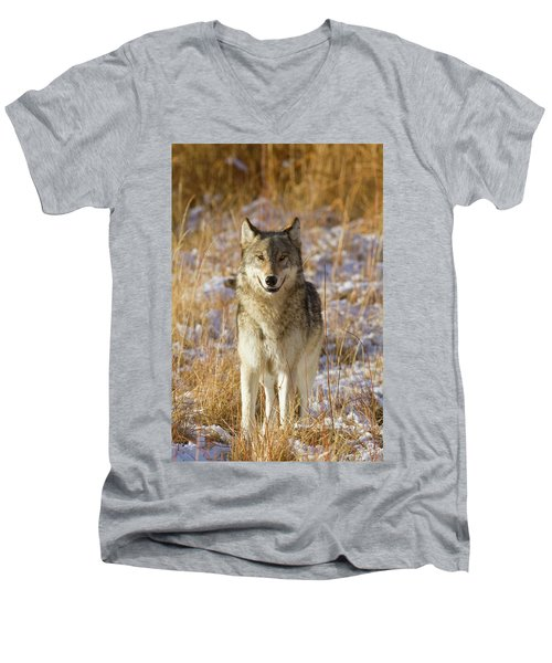Wild Wolf Portrait Men's V-Neck T-Shirt