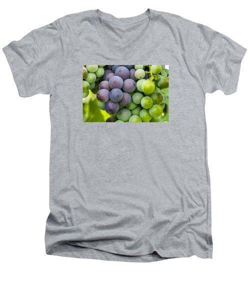 Wine Grapes Close Up Men's V-Neck T-Shirt