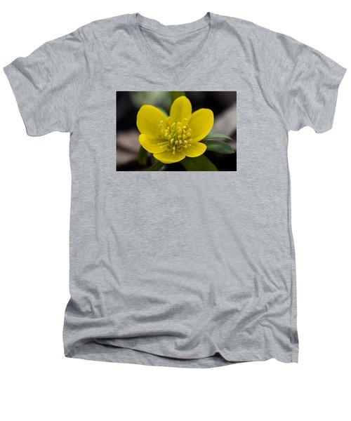 Winter Aconite Men's V-Neck T-Shirt by Dan Hefle