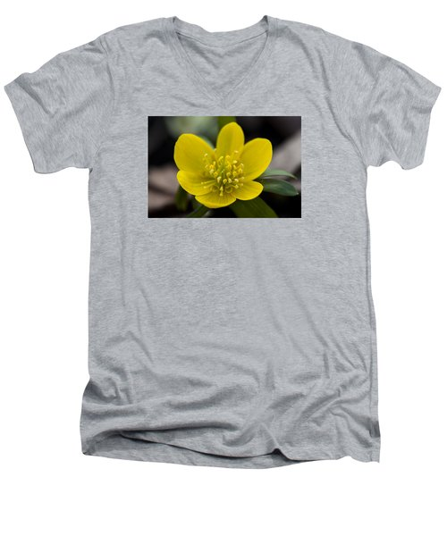 Winter Aconite Men's V-Neck T-Shirt