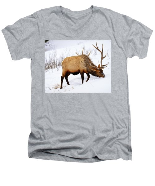 Winter Bull Men's V-Neck T-Shirt by Greg Norrell