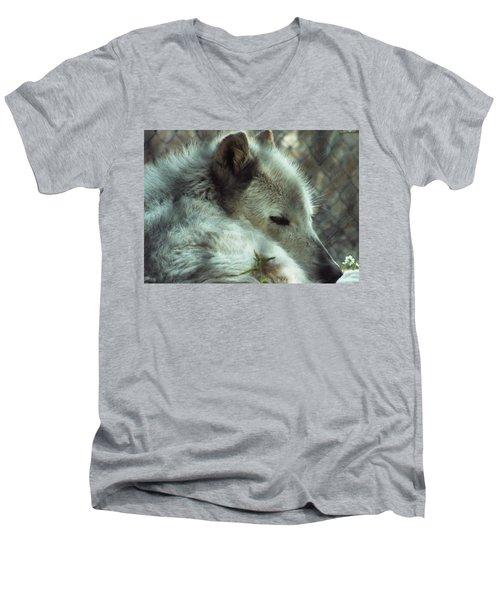 Wolf At Rest Men's V-Neck T-Shirt