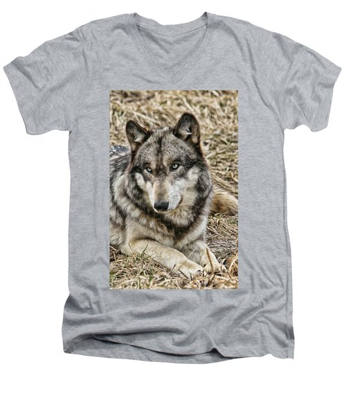 Men's V-Neck T-Shirt featuring the photograph Wolf Portrait by Shari Jardina