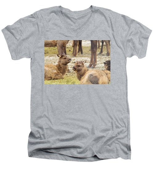 Men's V-Neck T-Shirt featuring the photograph Yearlings by Jeff Swan