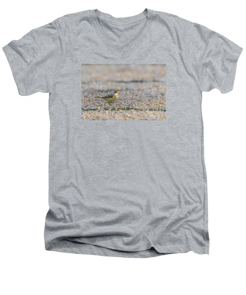 Men's V-Neck T-Shirt featuring the photograph Yellow Crowned Wagtail Juvenile by Jivko Nakev