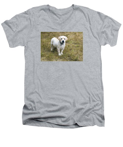 Yellow Labrador Puppy At Wanting To Play. Men's V-Neck T-Shirt