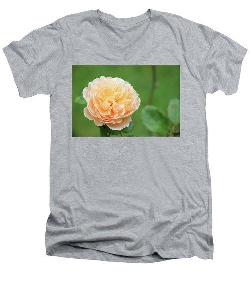 Yellow Rose In December Men's V-Neck T-Shirt by Kelly Hazel