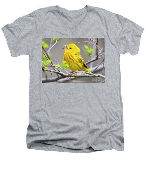 Yellow Warbler  Men's V-Neck T-Shirt by Ricky L Jones