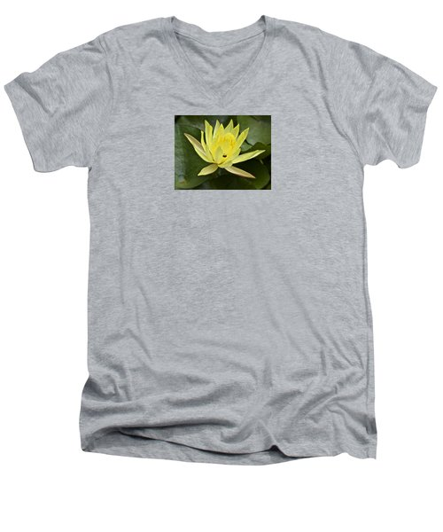 Yellow Waterlily With A Visiting Insect Men's V-Neck T-Shirt