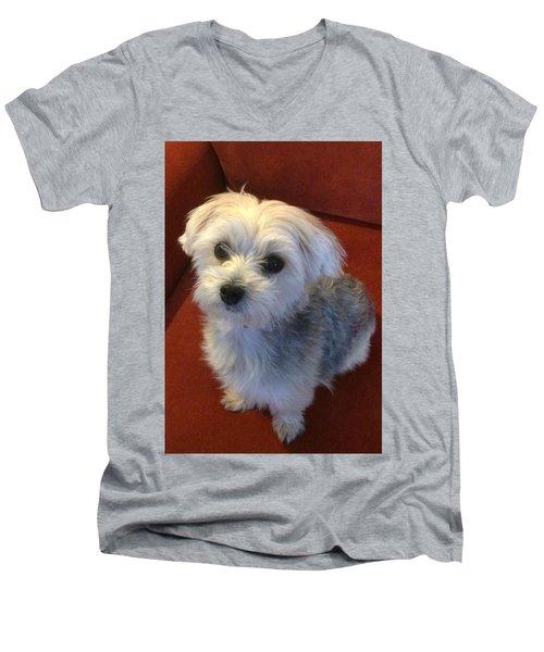 Yorkshire Terrier Men's V-Neck T-Shirt by Robin Regan