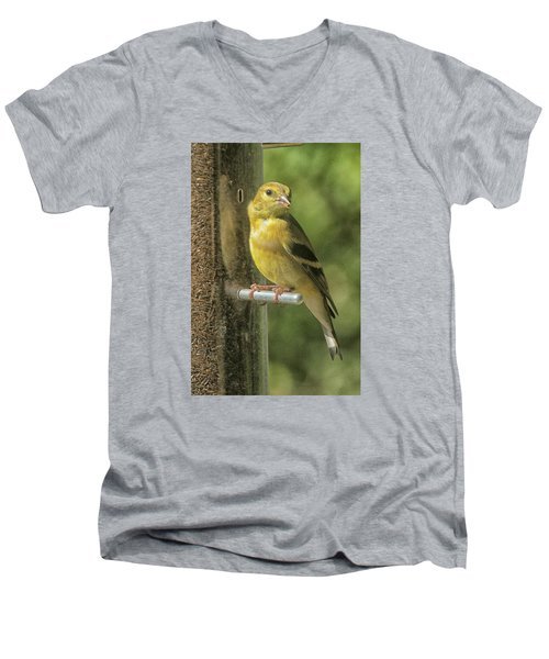Young Goldfinch Men's V-Neck T-Shirt by Constantine Gregory
