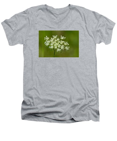 Men's V-Neck T-Shirt featuring the photograph Young Queen Anne's Lace  by Lyle Crump