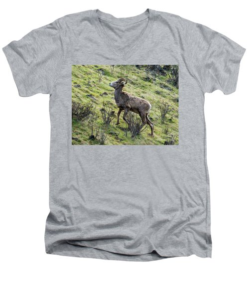 Men's V-Neck T-Shirt featuring the photograph Young Ram Climbing by Mike Dawson