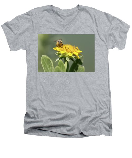 Yumm Pollen Men's V-Neck T-Shirt