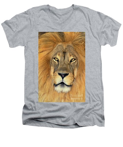 Men's V-Neck T-Shirt featuring the photograph African Lion Portrait Wildlife Rescue by Dave Welling